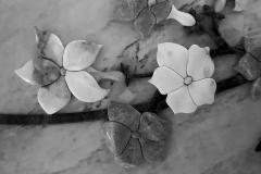 czvety2